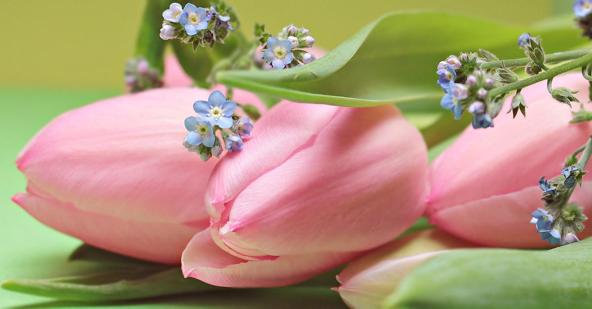 Tulips 2167753 1920